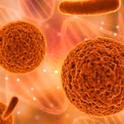 Células reprogramadas de la piel curan la diabetes tipo 1 en ratones